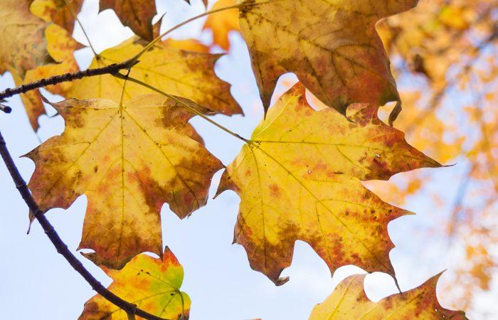 Les petits bonheurs de l' automne