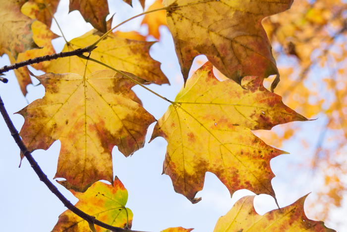 Les petits bonheurs de l'automne